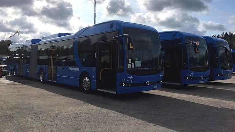 Tre av de nya elbussarna står uppradade på en asfaltsplan.