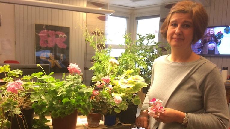 Elisabeth Pettersson står i studion ihop med sina pelargoner
