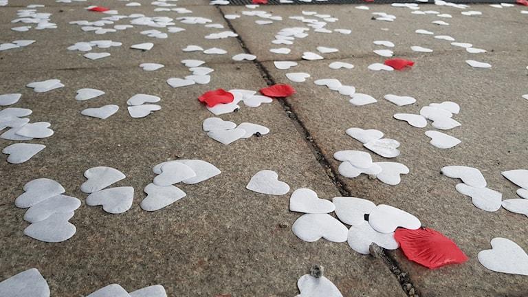 Massa vita pappershjärtan ligger på marken. Ett par röda rosenblad ligger också där.