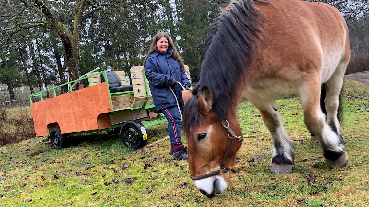 Jeanette Kobilsek och ardennerhästen Baltazar står utomhus vid den nybyggda kärran.
