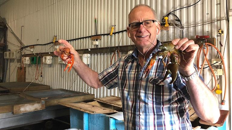 Kjell Wasling, kräfthandlare. Står bland kräfthinkar, håller en kräfta i var hand. Rutig skjorta och glasögon.