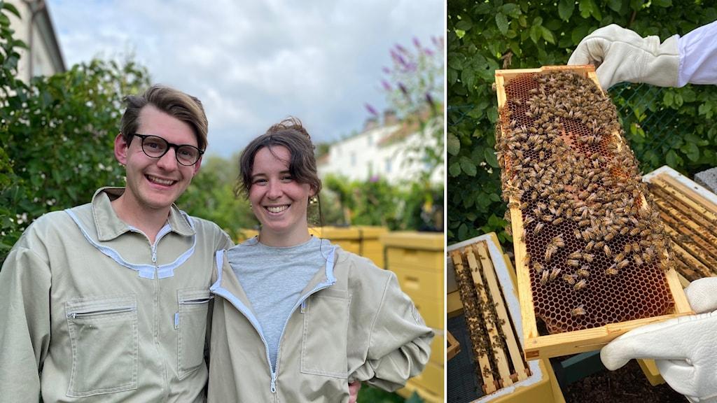 En man och en kvinna i biodlardräkter till vänster. En biram med bin och honungskakor till höger.