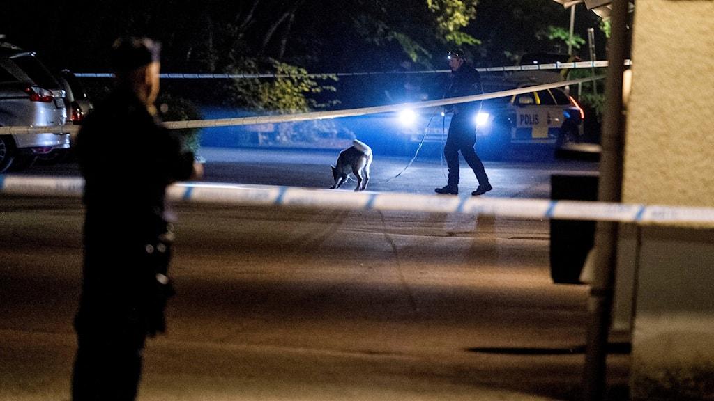 Avspärrningsband, poliser och en sökande polishund.