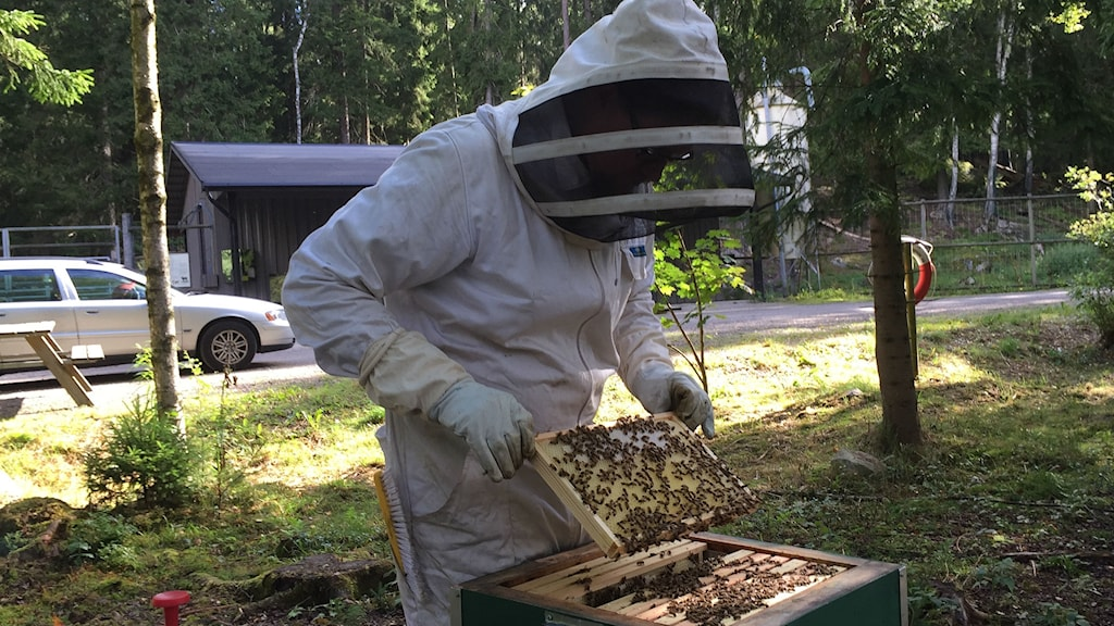 Petter Grubbström kollar på bin.