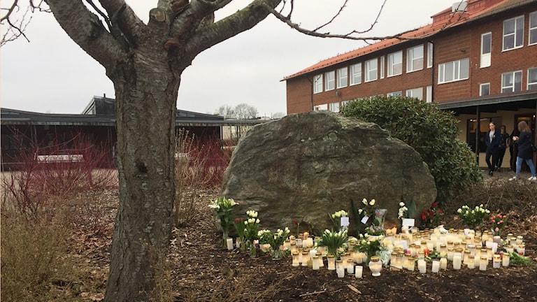 Ljus och blommor fyller marken framför en stor sten på skolgården.
