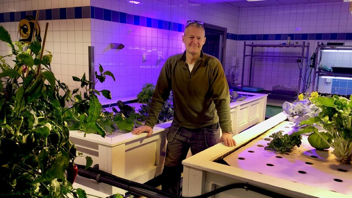 Niklas Wennberg odlar grönsaker i ett rum och fisk i rummet intill..