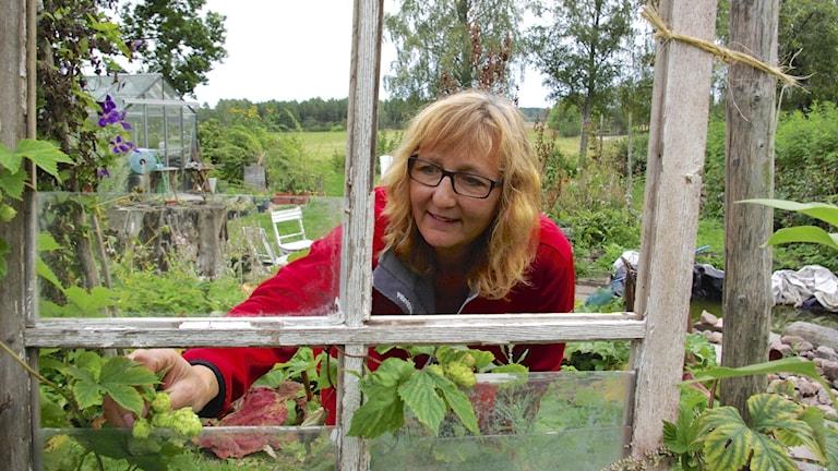 Gunilla Hellsten Boman, kommersiell humleodlare utanför Mariestad. Foto: Nina Frogneborn.