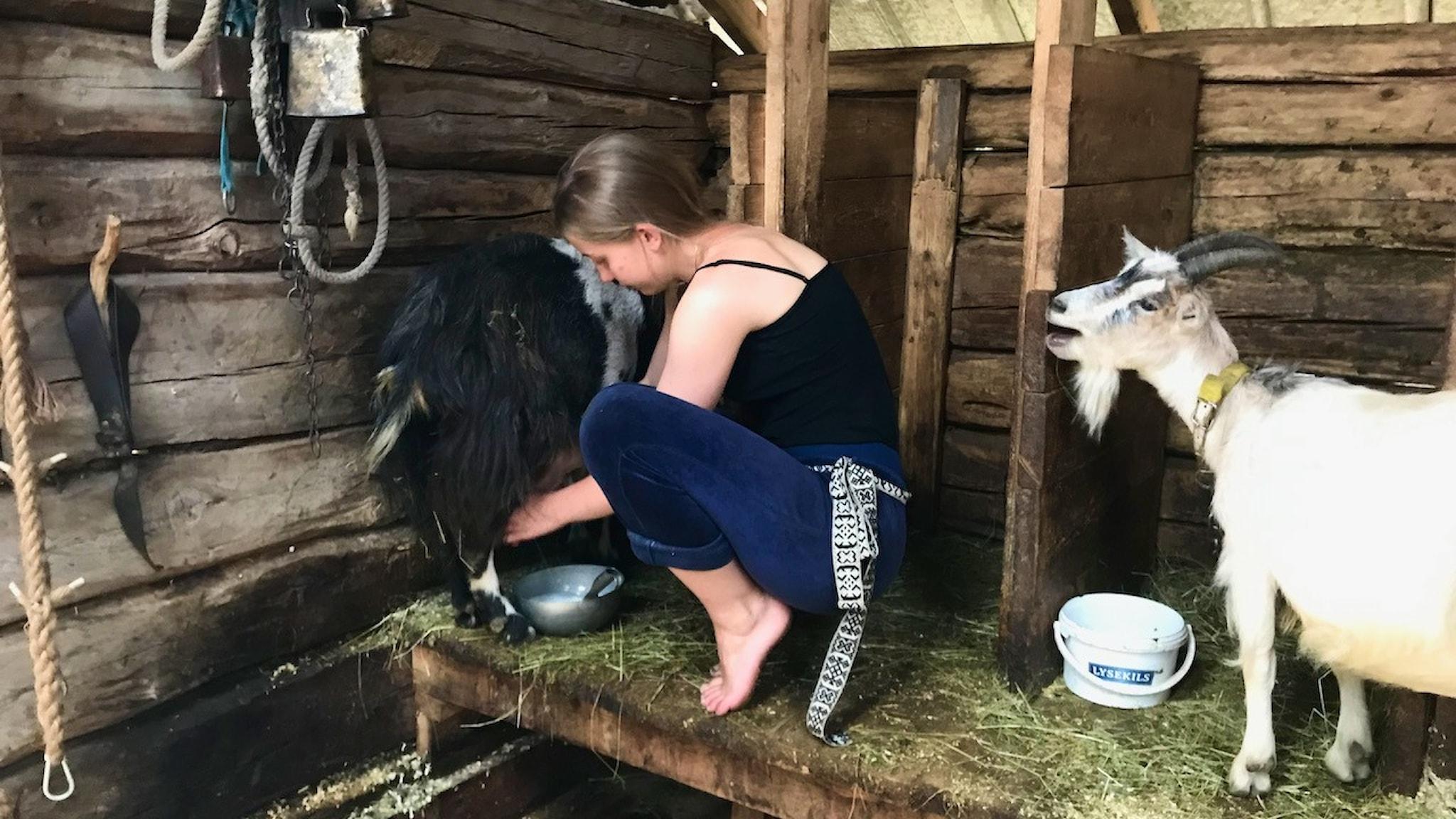 Det är lite trixigt att mjölka getter, tycker Kerstin Arnesson. På sommaren bor familjen på fäboden.