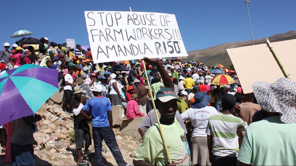 Lantarbetarstrejk DeDoorns Sydafrika.