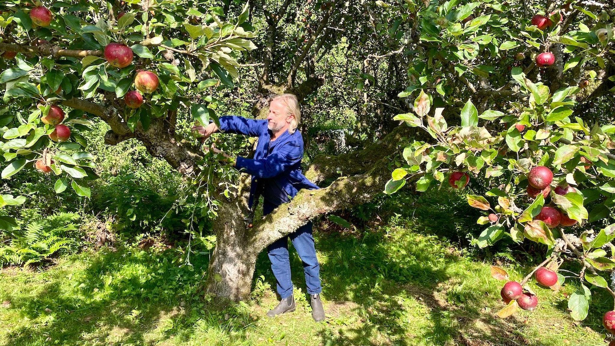 Charlie Drevstam kunde inget om äpplen när han blev med äppelodling.