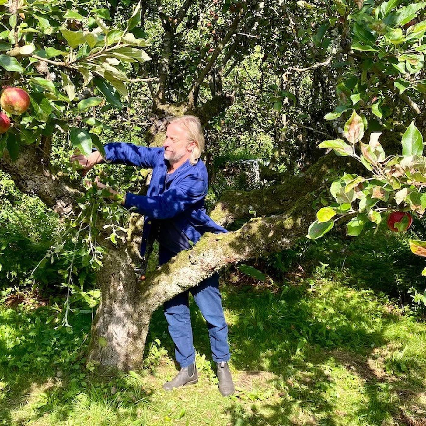 Äpplen och matfoto