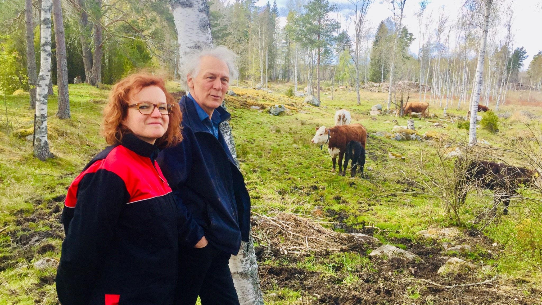 Ann-Helen Meyer von Bremen och Gunnar Rundgren tar emot i kohagen i Uppland.
