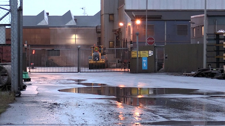 Metallåtervinningsföretaget Befesa Scandust i Landskrona har släppt ut stora mängder cyanider och tungmetaller som bland annat kontaminerat grundvatten. Utsläppen har gjort att både fiskar och fåglar har dött och har även slagit ut den biologiska reningen i kommunens reningsverk. Foto: Björn Lindgren/TT