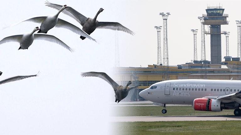 Fåglar på flygplatsen.