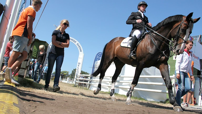 Häst på Falsterbo horse show. Foto: Anna Lyrenäs/Sveriges radio