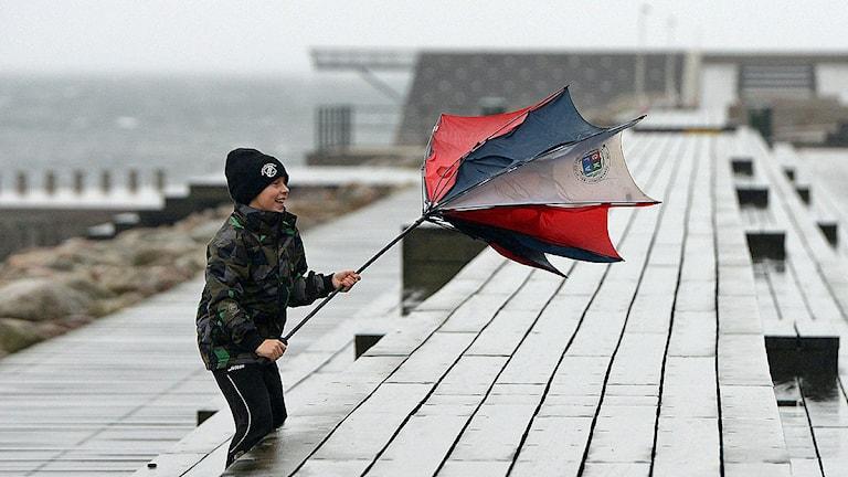 Ett barn testar vindriktningen med ett paraply då stormen Simone nådde Malmö med regn och ökande vind vid lunchtid på måndagen. SMHI har utfärdat klass 2 och klass 3 varningar för södra Sverige med anledning av måndagens storm. Foto: Johan Nilsson/TT