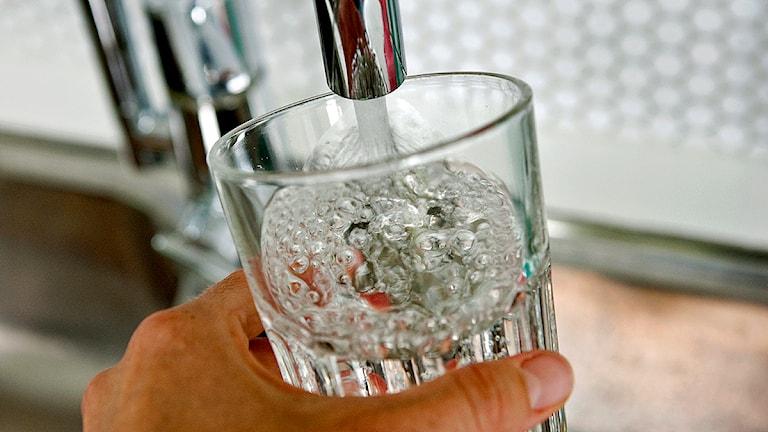 Vatten hälls upp i ett glas från vattenkran. Foto: Christine Olsson/TT