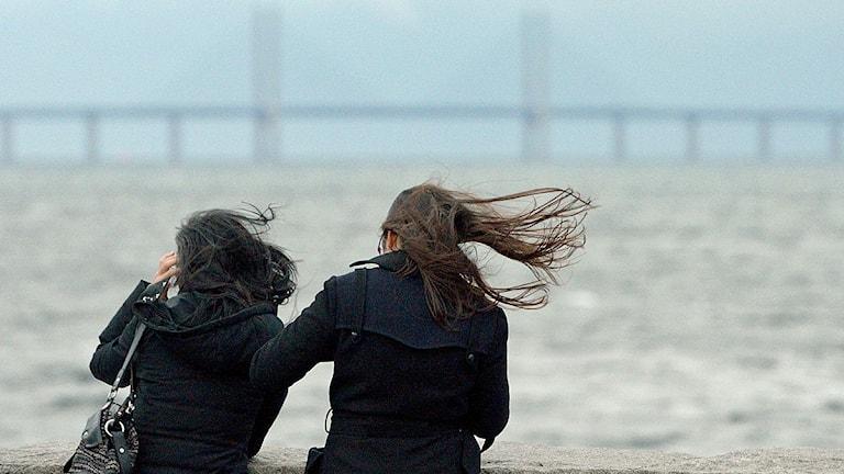 Vinden i håret och Öresundsbron i bakgrunden i Daniaparken i Malmö. Foto: Johan Nilsson/TT