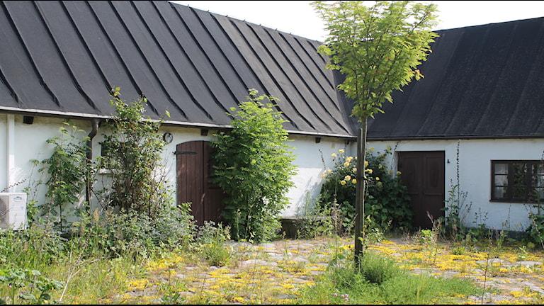 Bilden visar Dag Hammarskjölds gård med ett träd i förgrunden. Foto: Malin Thelin/Sveriges Radio.