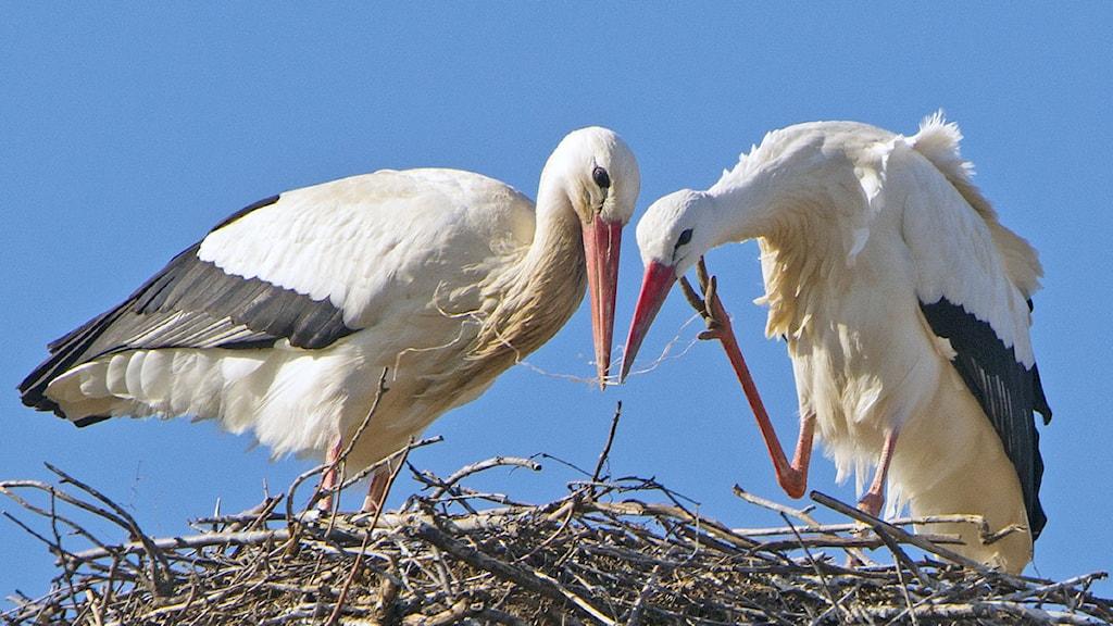 Storkar