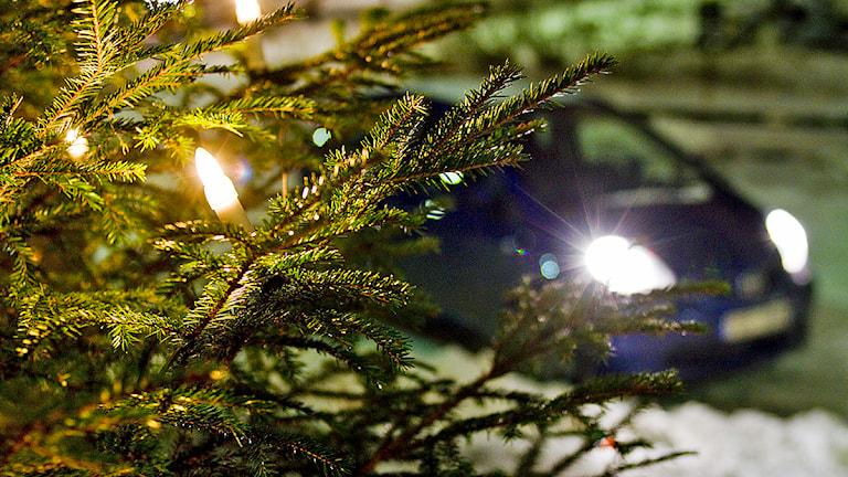 En bil bakom en julgran. Foto: Christine Olsson/TT