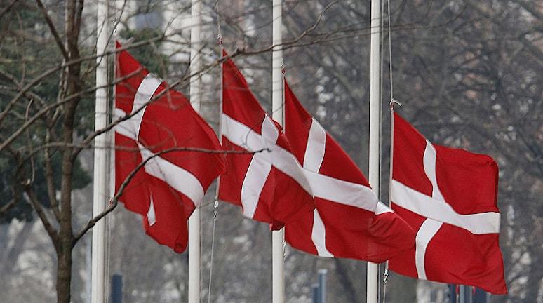 Danska flaggor på halv stång. Foto: Michael Probst/TT