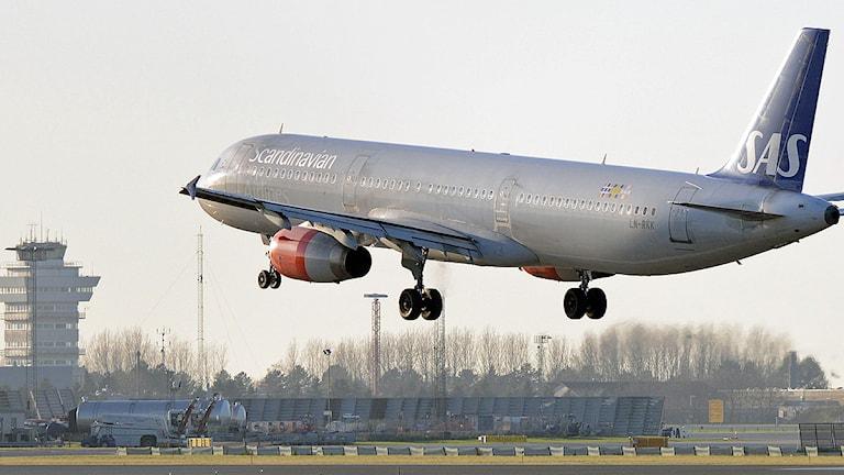 Ett SAS plan lyfter från Köpenhamns flygplats, Kastrup. Foto: Johan Nilsson/TT