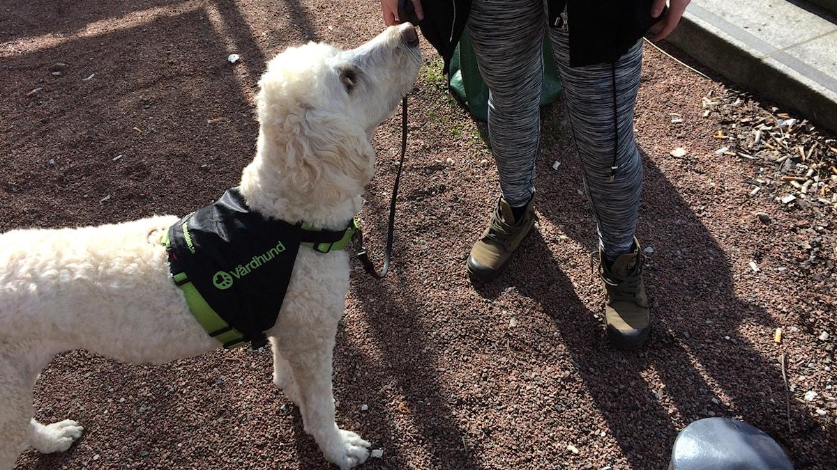 Vårdhunden Tindra och patienten Sanna. Foto: Petra Haupt/Sveriges Radio