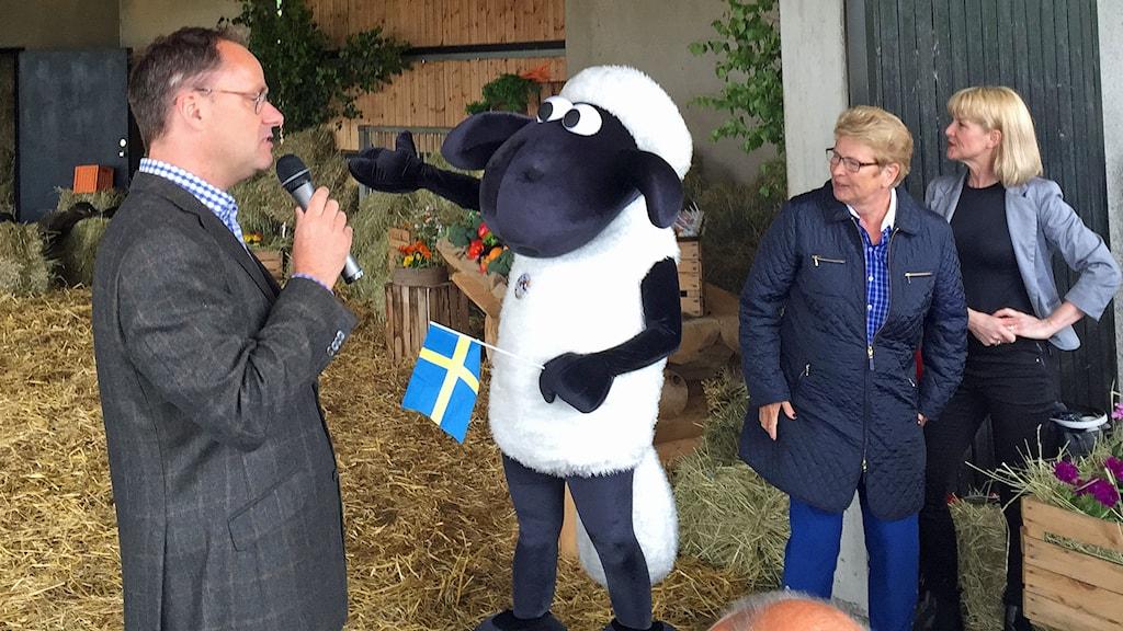 Fåret Shaun på Skånes djurpark. Foto: Jonathan Hansen/Sveriges Radio