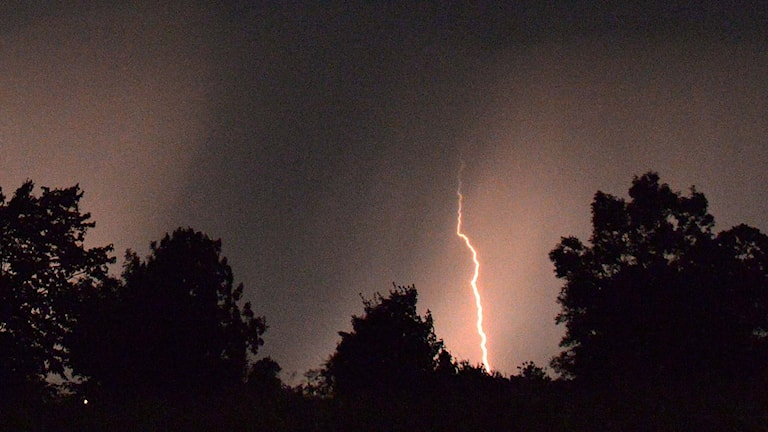 En blixt slår ner i ett skogsparti. Foto: Johan Nilsson / TT