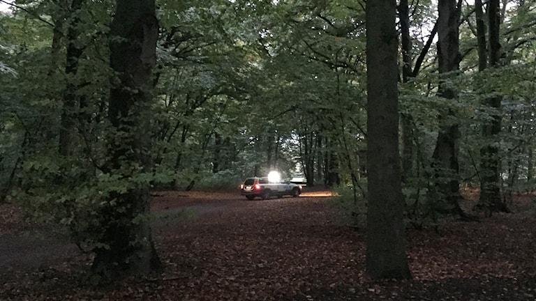 Polisbil söker efter vildsvin i Pildammsparken i Malmö. Foto: Anton Kalm/Sveriges Radio