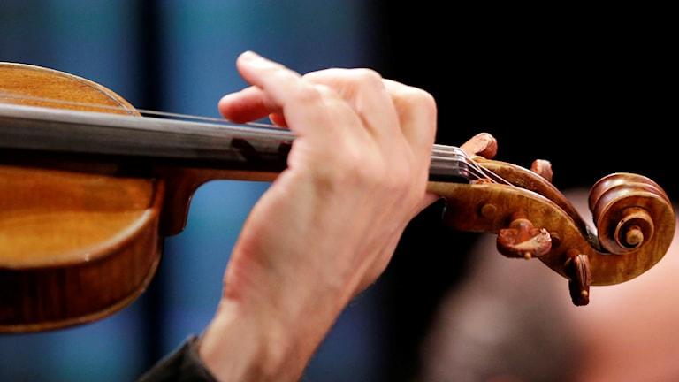 Musiker spelar violin. Foto: Marcio Jose Sanchez/TT