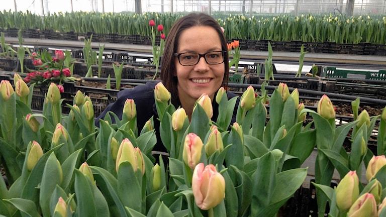 Anna-Karin Söderdahl är produktionsledare för Tygelsjöanstaltens växthus. Hon står bakom sin favoritsort tulpaner - Joyce. Foto: Jonathan Hansen/Sveriges Radio