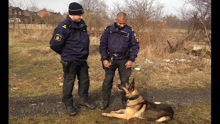 Polishunden Devil med hundförarna Linus Uppström och Joakim Hansson.
