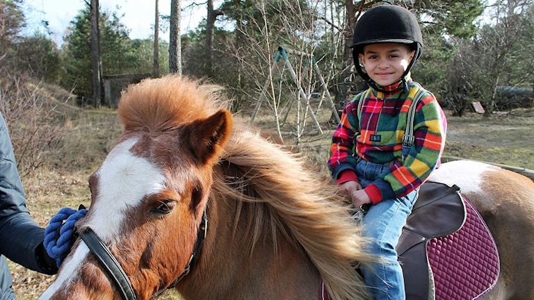 Hasan gillare ponnyridningen.