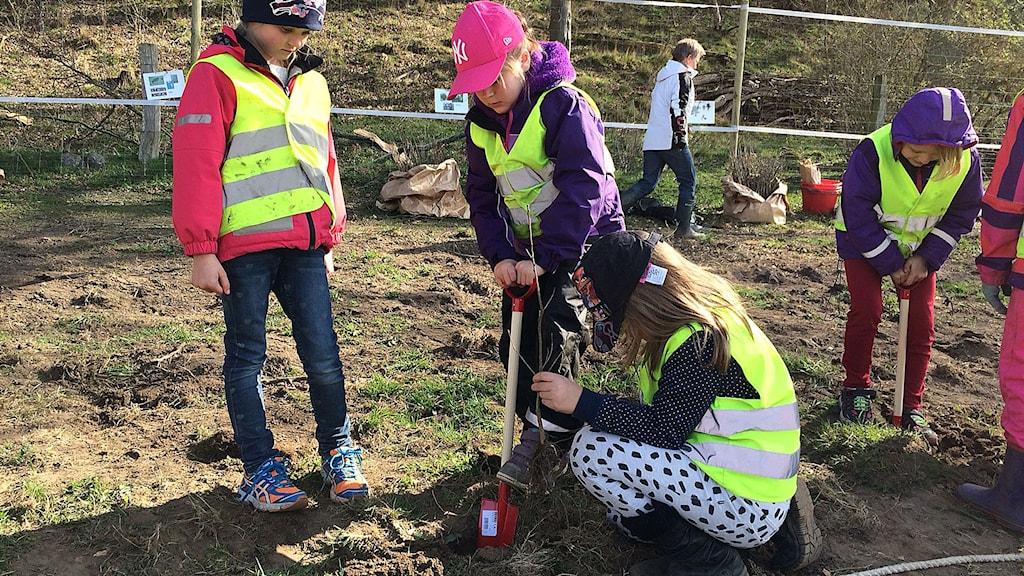 Sexåringar platerar ek i Fyledalen.