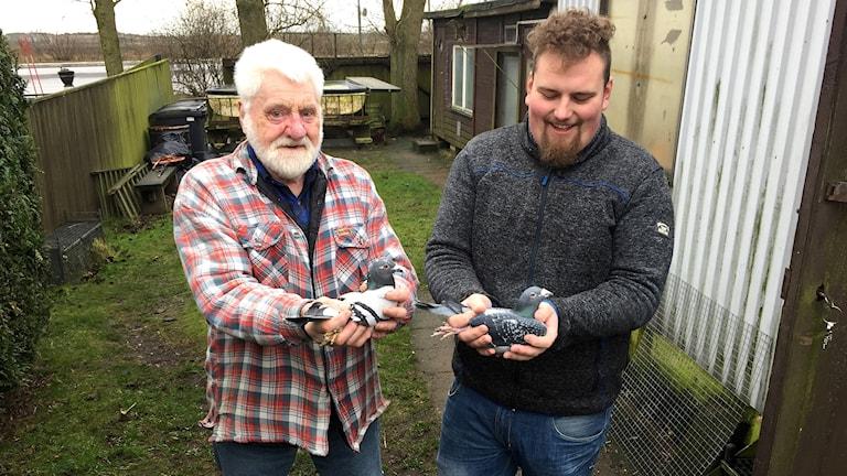 Rolf och Tony Olsson tävlar med brevduvor i Team Olsson.