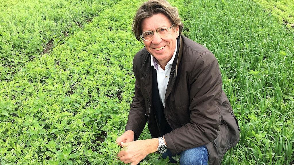 Erik Steen Jensen vid försöksodlingen, där fyra sorters linser odlas.