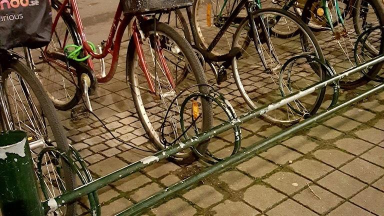 På flera ställen sitter hänglås som markörer. Foto: Golaleh Farhang-Azad/Sveriges Radio
