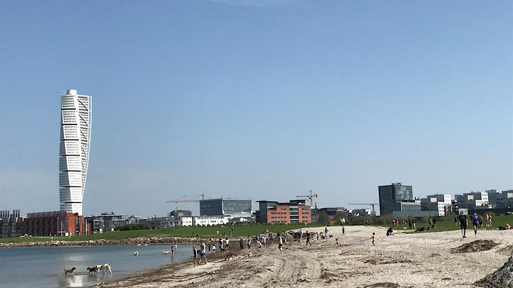 Ribban i Malmö