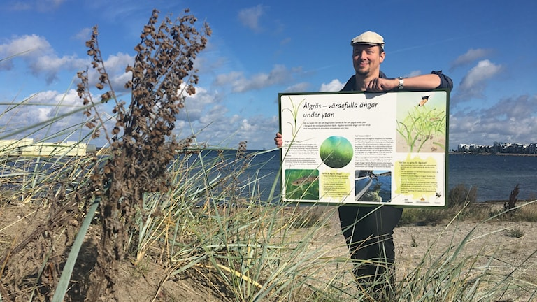Marinbiolog Jonas Gustafsson på en strand och håller i en informationsskylt om ålgräs.