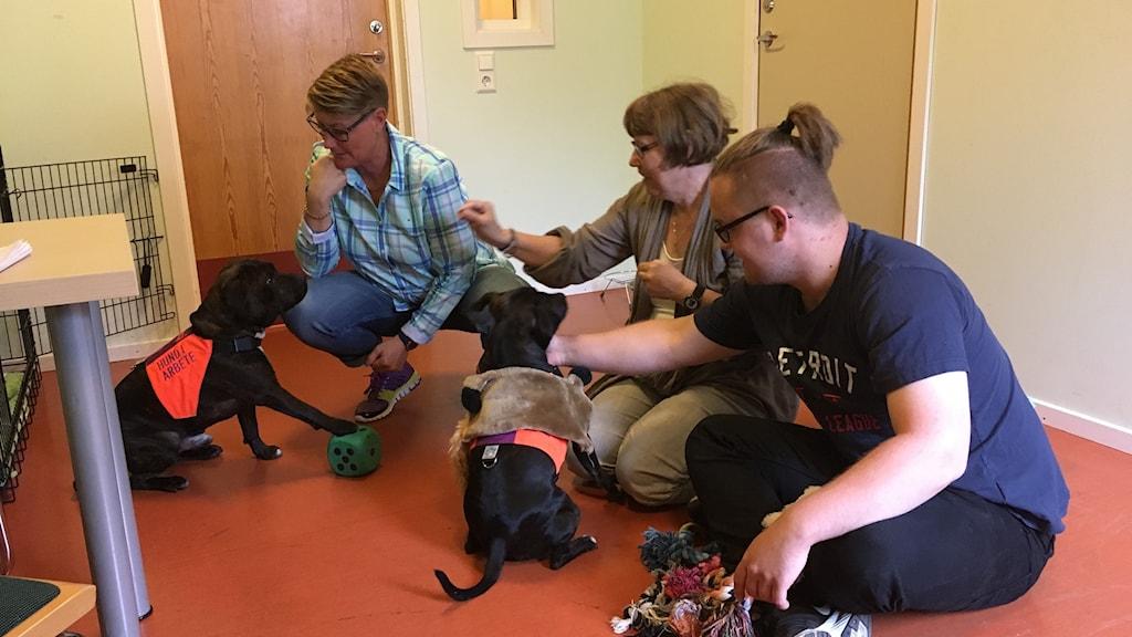 terapihundarna Rossi och Berit tillsammans med Deras ägare Anna Svendsen som är handledare på den dagliga verksamheten steget på Fogdaröd utanför Höör. På bilden syns också Lotta Nilsson och Jacob Karlén som njuter av hundarnas sällskap.