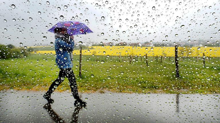 En kvinna skyddar sig mot regnet med ett paraply. Foto: Michael Probst/TT