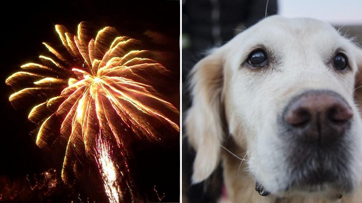 hund och raket i splittbild