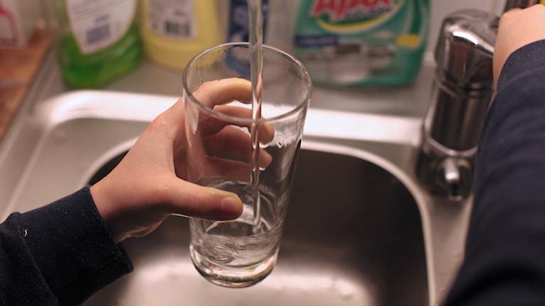 En person tappar upp vatten ur kranen i ett glas. Foto: Karin Genrup/Sveriges Radio