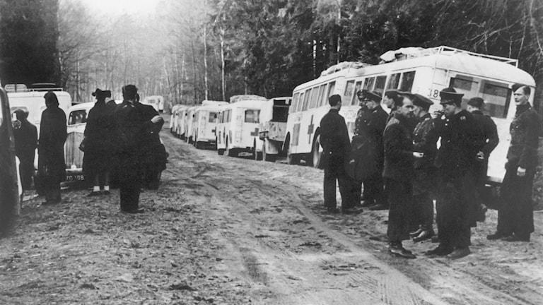 Föreställningn handlar om flyktingmottagandet 1945 när Malmö Museer upplät sina lokaler till judiska flyktingar som bland annat kom med vita bussarna.