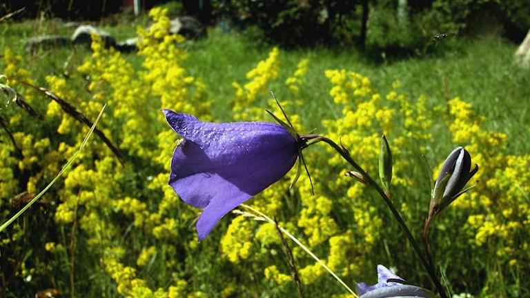 Floran är under förändring på grund av varmare klimat.