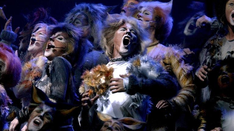 Musikalen Cats i Globen i Stockholm.