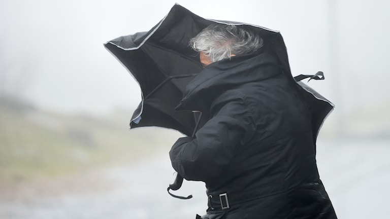 Kvinna kämpar med paraply mot blåsten. Foto: Arne Dedert/TT