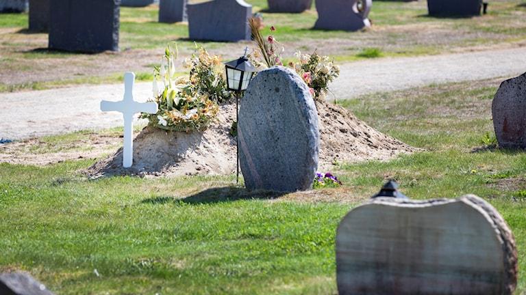 Blomstölderna på kyrkogården i Trelleborg ökar.